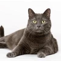 Bilde for kategori Katt