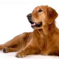 Bilde for kategori Hund