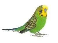 Bilde for kategori Fugl