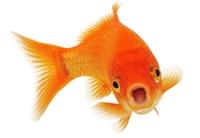 Bilde for kategori Fisk